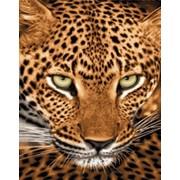 Картины гобелен Властилин, тематика животные фото