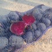 Сетка овощная для столового буряка 40х60 фото