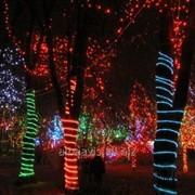 Архитектурная подсветка деревьев, кустов лентами, подсветка гирляндами фото