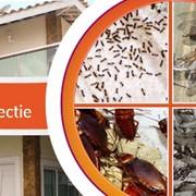 Дезинсекция: уничтожение насекомых фото