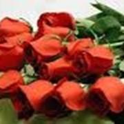 Розы красные фото