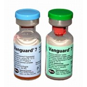 Вакцина для собак против чумы плотоядных, парвовирусного энтерита, гепатита Вангард 7 фото