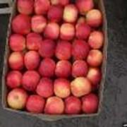 Яблоки айдаред оптом фото