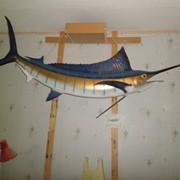 Рыба Марлин фото