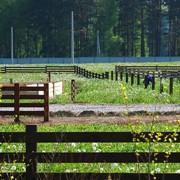 Участок в сосновом лесу под ИЖС Московская область фото