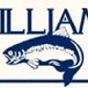 Блёсена WILLIAMS фото