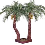 Пальмы декоративные фото