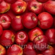 Яблоки молдавские на экспорт фото