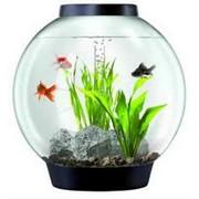 Круглый аквариум фото