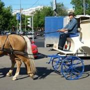 Лошади на свадьбу, съемки,корпоративы и прочие мероприятия фото