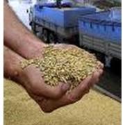 Экспорт зерна и зерновых культур проса, сорго, льна фото