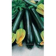 Семена Евро Кабачок Черный Красавец фото