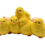 Цыплята 19х10 см фото