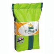 Семена подсолнечника Евралис семанс ЕС Амис СЛ — 01/002 фото