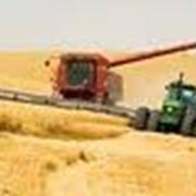 Услуги по уборке урожая зерновых культур и сахарной свеклы сельхозтехникой (комбайны). фото