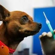 Вакцинация (прививки животным) фото