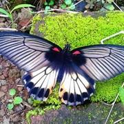 Живые бабочки тропические подарок фото