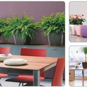 Горшки и кашпо для комнатных растений с оросительной системой Lechuza (лечуза) фото