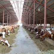 Готовый животноводческий комплекс на 5000 голов КРС с полной инфраструктурой фото