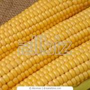 Кукуруза оптом в Украине фото