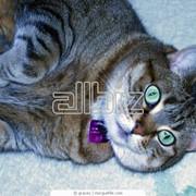Лечение животных, Ветеринарная терапия, Ветеринарная терапия на дому фото