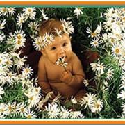 Консультации детского аллерголога фото