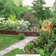 Оформление клумб и цветников фото