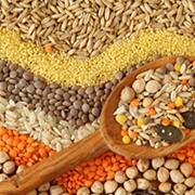Купить продать зерно товарное злаковых технических культур на экспорт фото
