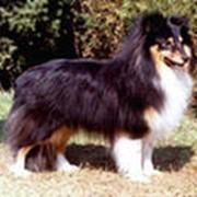 Собаки элитных пород. фото