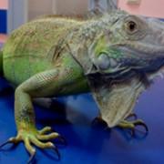 Лечение рептилий фото
