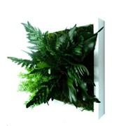 Живые картины, панно стабилизированные растения фото