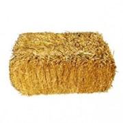 Солома пшеницы и ячменя в тюках фото