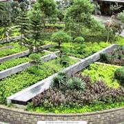 Озеленение территорий, ландшафтный дизайн фото