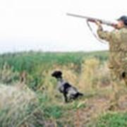 Охота фото