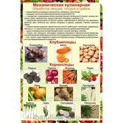 Плакат Механическая обработка овощей Г.19 фото
