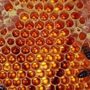 Пчелиные соты фото