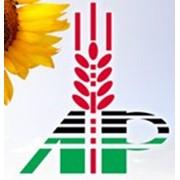 Семена озимой пшеницы. Сорт Ермак (элита и 1 репродукция) фото