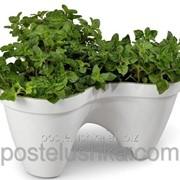 Горшок для цветов IVY planter бело-зеленый фото