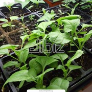 Услуги агрономического сопровождения садов, виноградников и лесопарковых насаждений фото