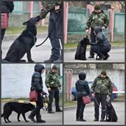 Дрессировка собак индивидуально и в группах фото