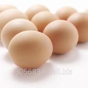 Яйцо инкубационное бройлерное ИЗА-F15 фото