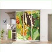 Шкаф-купе с бабочкой фото
