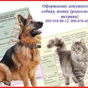 Оформление документов на собаку,кошку(родословная) фото