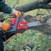 Валка деревьев любой сложности, санитарная обрезка, корчевание. фото