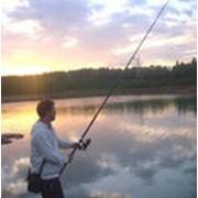 Лов товарной живой рыбы фото