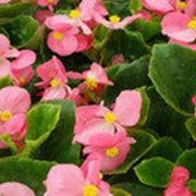 Рассада однолетних растений и овощей фото
