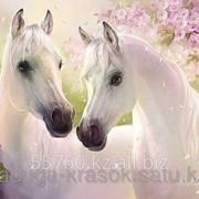 Картина стразами Два белых коня - 45х60см фото