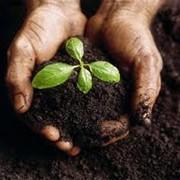 Научно-исследовательская работа в области растениеводства фото