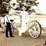 Прокат карет с лошадьми, прокат свадебных карет Одесса фото