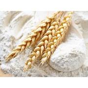 Пшеничная мука фото